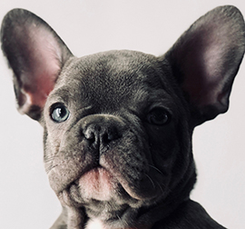 NoCO Custom Homes dog